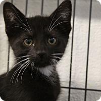 Adopt A Pet :: Delta - Sarasota, FL