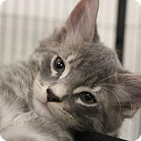 Adopt A Pet :: Payson - Sarasota, FL