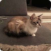 Adopt A Pet :: Hermione - Atlanta, GA