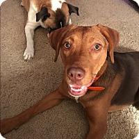 Adopt A Pet :: Mabel - Aurora, IL