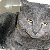 Adopt A Pet :: Miles - Wildomar, CA
