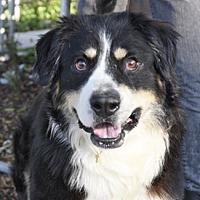 Adopt A Pet :: HARVEY - Pt. Richmond, CA