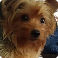 Adopt A Pet :: Moe - Ashland, KY