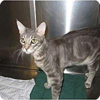 Adopt A Pet :: Zamba - Modesto, CA