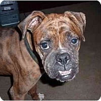 Adopt A Pet :: Abbey Rose - Brunswick, GA