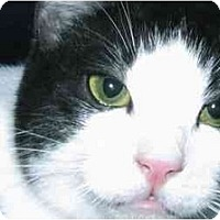 Adopt A Pet :: Parker - Brea, CA