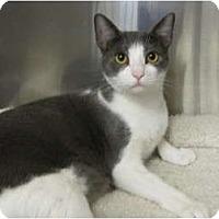 Adopt A Pet :: Oliver - Modesto, CA