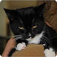Adopt A Pet :: Talia - Monroe, GA