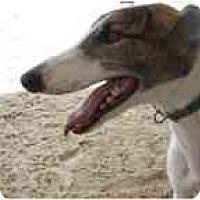 Adopt A Pet :: Charlie - St Petersburg, FL