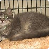Adopt A Pet :: O'Henry - Shelton, WA