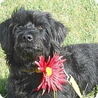 Adopt A Pet :: Fiona - Lockhart, TX