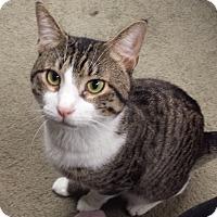 Adopt A Pet :: Prince Eric - Berkeley Hts, NJ