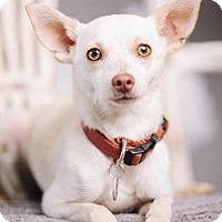 Adopt A Pet :: JayJay - Portland, OR
