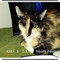 Adopt A Pet :: KiKi-FOSTER ASAP - Brandon, FL