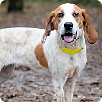 Adopt A Pet :: Maddie - Orlando, FL