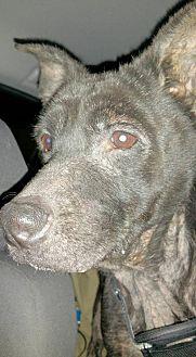 Labrador Retriever/Terrier (Unknown Type, Medium) Mix Dog for adoption in New York, New York - Manchester