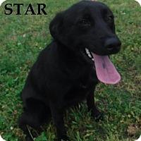 Adopt A Pet :: Star - Batesville, AR