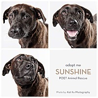 Adopt A Pet :: Sunshine - Garden City, MI