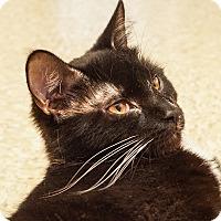 Adopt A Pet :: Adele - Albany, NY