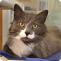 Adopt A Pet :: Meadow - Salisbury, MA