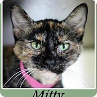 Adopt A Pet :: Mitty - Sullivan, IN