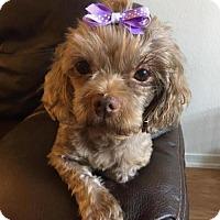 Adopt A Pet :: Maisy - Los Angeles, CA