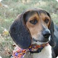 Adopt A Pet :: Lucy - Birmingham, AL
