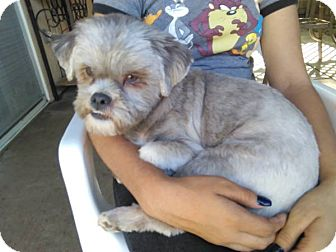 Shih Tzu Mix Dog for adoption in Los Banos, California - Diego