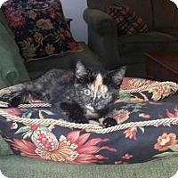 Adopt A Pet :: Josie - Lockport, NY