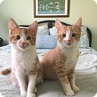 Adopt A Pet :: Butch D - Orlando, FL
