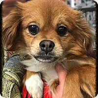 Adopt A Pet :: Darwin - Los Alamitos, CA