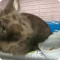 Adopt A Pet :: BONGO - Gloucester, VA