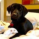 Adopt A Pet :: Carmen