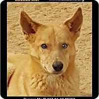 Adopt A Pet :: Fox - Waldorf, MD