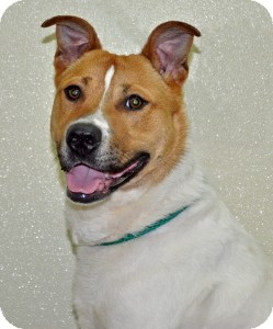 Terrier (Unknown Type, Medium) Mix Dog for adoption in Port Washington, New York - Buster