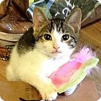 Adopt A Pet :: Lena - Monroe, GA