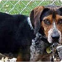 Adopt A Pet :: Cosby - Novi, MI