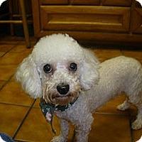 Adopt A Pet :: Luke - Cantonment, FL