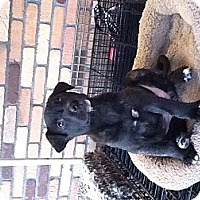 Adopt A Pet :: Viola - North Hollywood, CA
