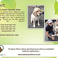 Adopt A Pet :: Albert - Ottawa, ON