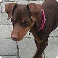 Adopt A Pet :: Triton - Columbus, OH