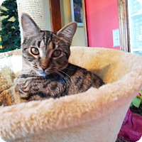 Adopt A Pet :: Muffin - Xenia, OH