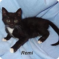 Adopt A Pet :: Remi - Bentonville, AR