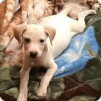 Adopt A Pet :: Una - Marlton, NJ