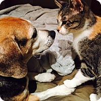 Adopt A Pet :: Eloise - Los Angeles, CA