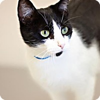 Adopt A Pet :: Jewels - Visalia, CA