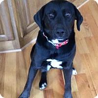 Adopt A Pet :: Mitsy - Manhasset, NY