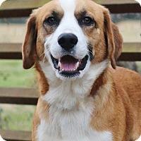 Adopt A Pet :: Dublin - Nashville, TN