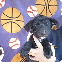 Adopt A Pet :: Nova - Oviedo, FL