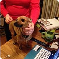 Adopt A Pet :: Peter - Seattle, WA